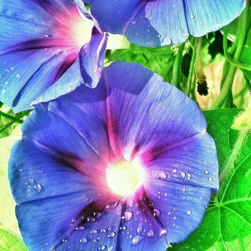 Flowers Flower Shot Nofilter#noedit Nature