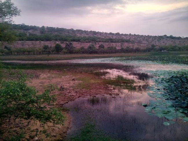 Wildlife centuary bassi near chittor-garh rajasthan Tree Reflection Landscape Nature Agriculture Outdoors No People Forest Beauty In Nature Sky Perfume Freshness Day Astronomy