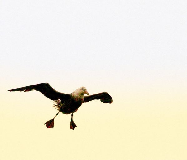 Low angle view of bird flying in the sky