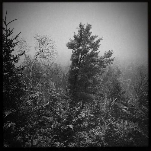 Still Winter IPhoneography Mobileart NEM Black&white Oggl