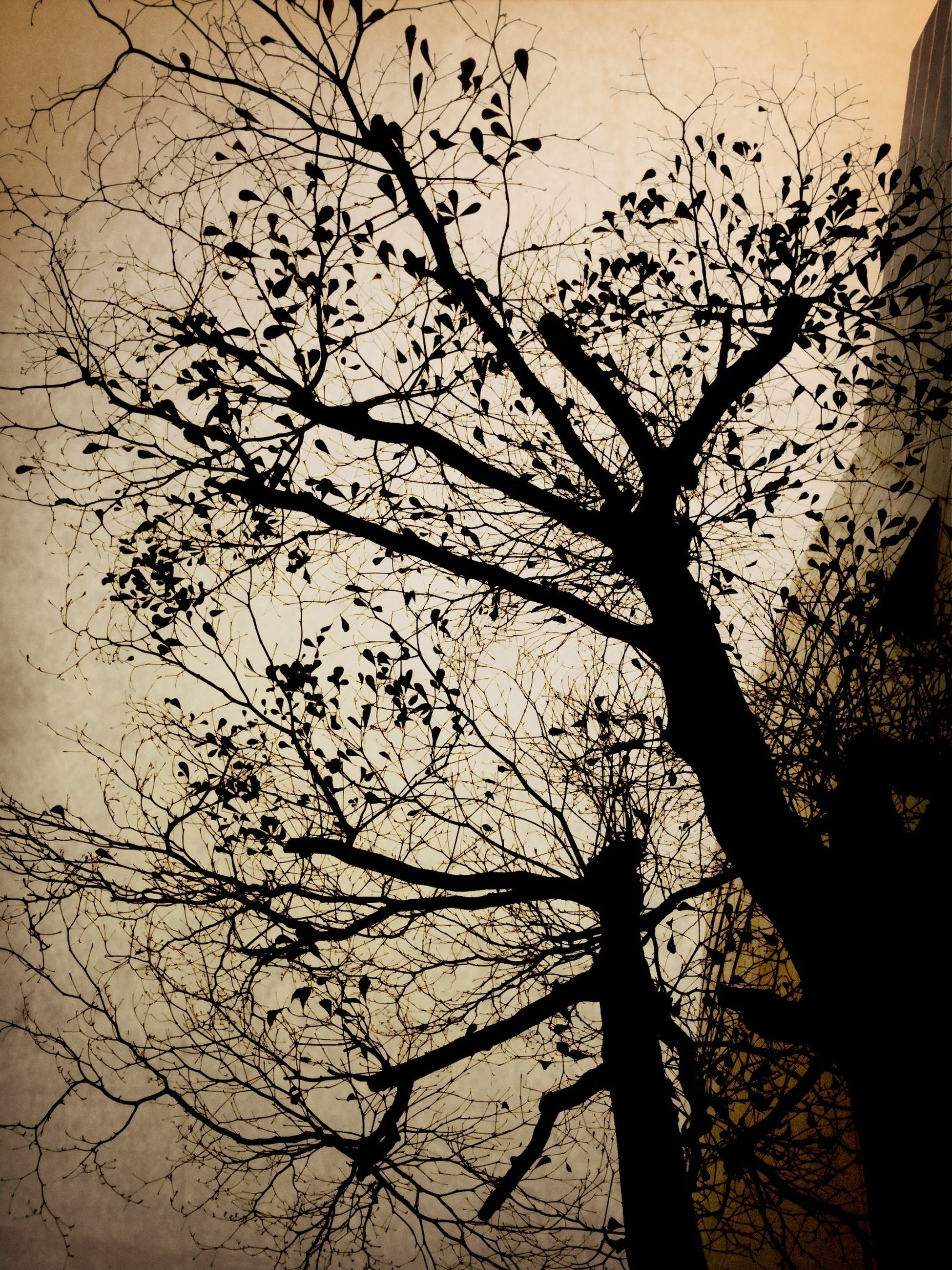branch, bare tree, silhouette, tree, low angle view, tranquility, nature, sunset, sky, beauty in nature, tree trunk, dusk, scenics, outdoors, no people, growth, tranquil scene, clear sky, outline, dead plant