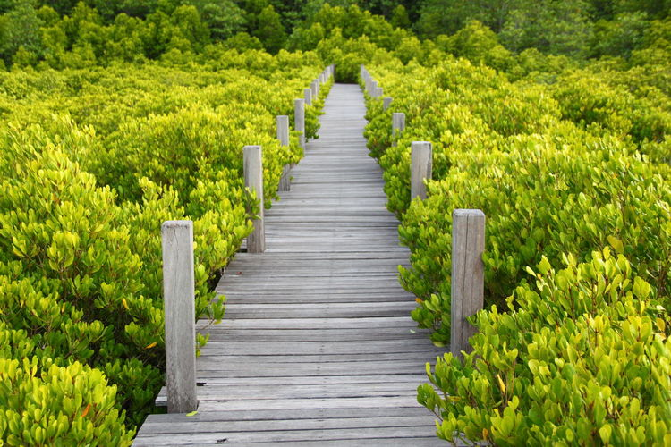Green Color Landscape Nature Outdoors Plant The Way Forward Tree Walkway Wooden Way