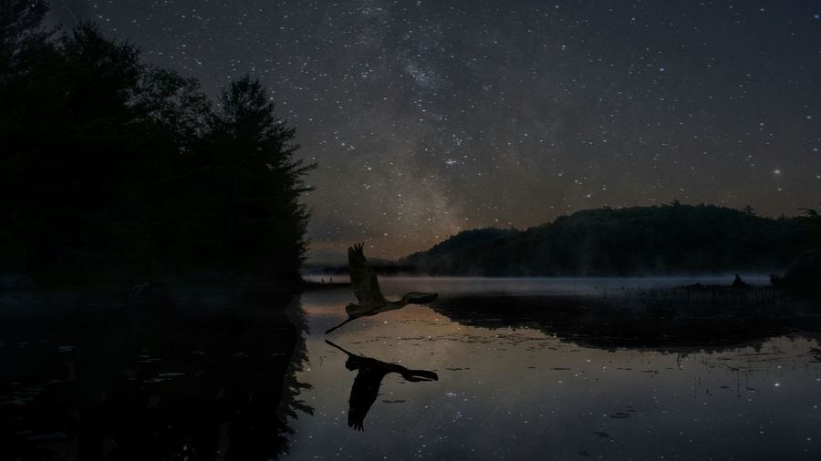 Reflection Night Star - Space Lake Astronomy Sky Tree Space Water Silhouette Beauty In Nature Nature Landscape Tranquil Scene Milky Way Star Field Constellation Outdoors Galaxy Heron Flight Bird Fly Reflection Ontario