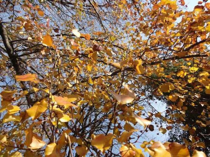 Nature Trees Leaves Fall Naturehippys Best Of Fall