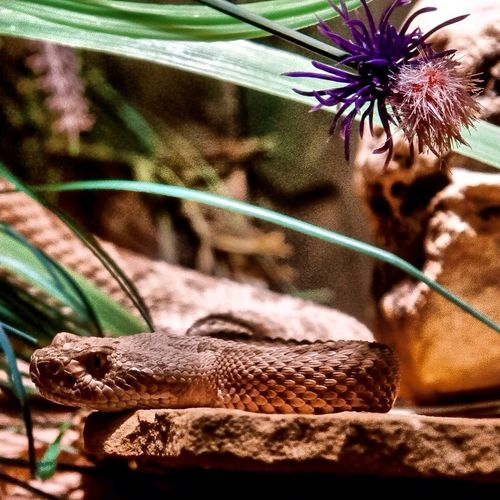 Animal Animal Body Part Animal Head  Animal Markings Animal Photography Animal Themes Animals Beauty In Nature Close-up Danger Day Flower Focus On Foreground Growth Natural Pattern Nature No People Plant Reptile Selective Focus Snake VP Zoo Zoo Animals  Zoology