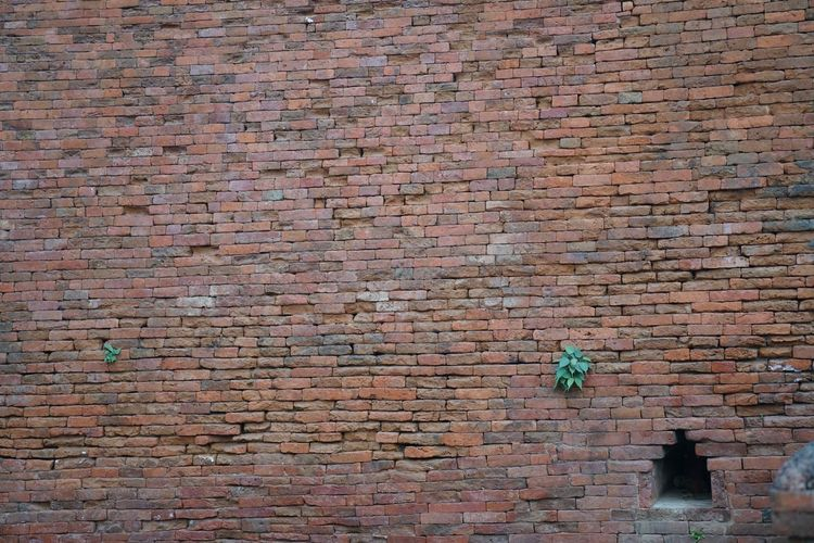 Life Wall Architecture Backgrounds Brick Brick Wall Building Building Exterior Built Structure Day Full Frame Growth Low Angle View Nature No People Old Outdoors Pattern Plant Textured  Wall Wall - Building Feature