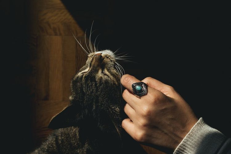Cat Ring Hand Light Love First Eyeem Photo FirstEyeEmPic