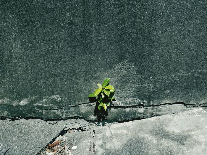 Life finds a way Positive Emotion Activity Fight Life Is Struggle Young Tree Tree Seedlings Banyan Tree Earthquake Concrete Wall Crack Gray Taiwan Kaohsiung, Taiwan Leaf Close-up Green Color Plant Growing EyeEmNewHere
