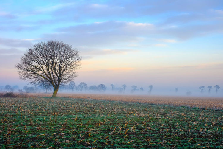 Lonely bare tree in a countryside morning landscape Bare Tree Beauty In Nature Cloud - Sky Environment Field Fog Grass Isolated Land Landscape Nature No People Non-urban Scene Outdoors Plant Remote Scenics - Nature Sky Solitude Tranquil Scene Tranquility Tree