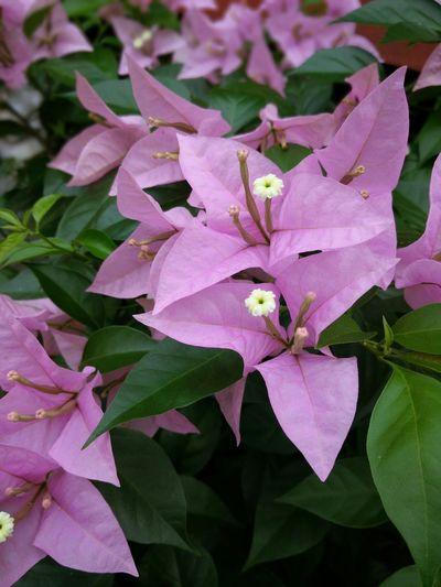 Flowers Purple Flower Bunga Kertas