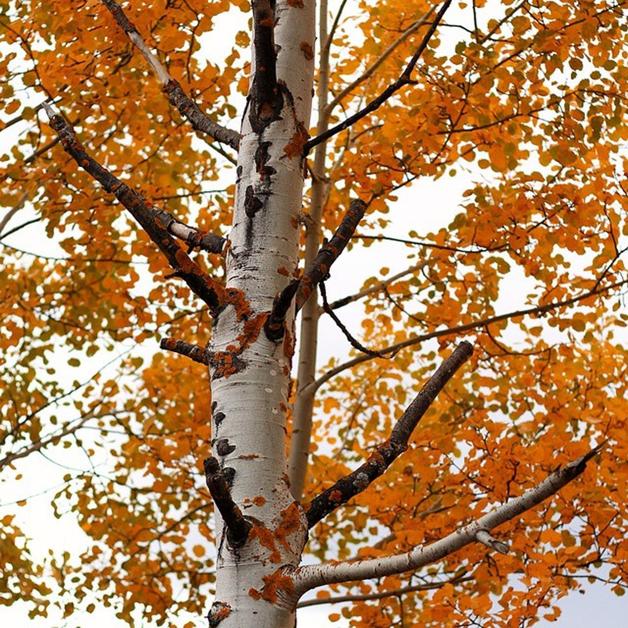 tree, autumn, branch, tree trunk, nature, leaf, beauty in nature, low angle view, day, change, no people, outdoors, growth, tranquility, forest, scenics, close-up, sky