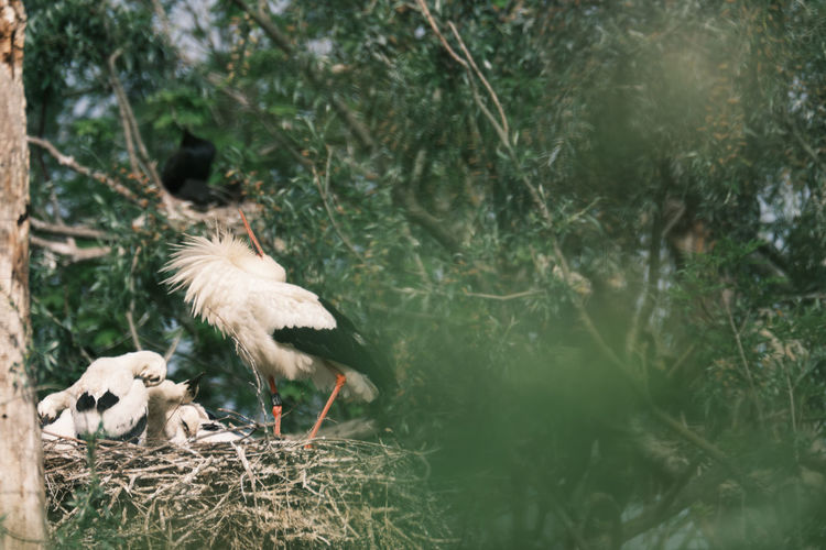 View of white stork in nest