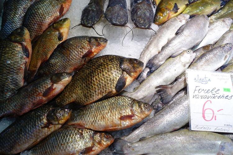 Fish at Riga