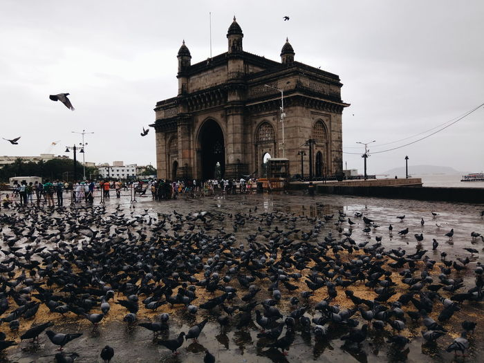 View of birds in city