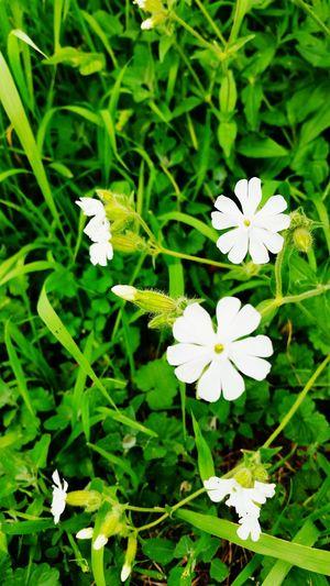 Flowers Flower