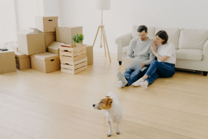 High angle view of couple using laptop sitting by sofa with dog at home