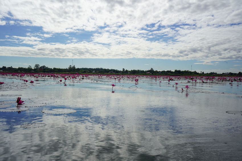 Water Cloud - Sky Sport Sky Group Of People Crowd Large Group Of People Nature Real People Day Leisure Activity Beach Lifestyles Competition Sea Land Reflection Outdoors Kumphawapi Red Lotus Red Lotus Lake Red Lotus Thailand Stream ทะเลบัวแดง