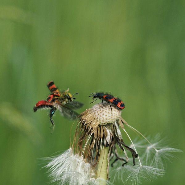 Nature's Diversities Käfertreffen The Great Outdoors - 2016 EyeEm Awards Nature Macro
