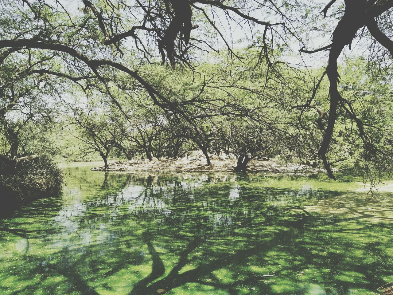 tree, water, reflection, lake, nature, tranquility, outdoors, beauty in nature, day, tranquil scene, waterfront, no people, branch, growth, scenics, forest, sky