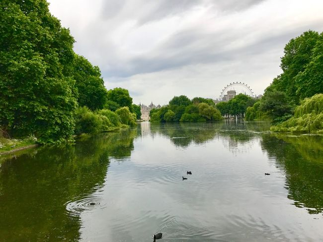 Millenium Wheel Trees St James Park London  St James Park  London Water Tree Nature Sky Reflection Day Beauty In Nature No People Bird