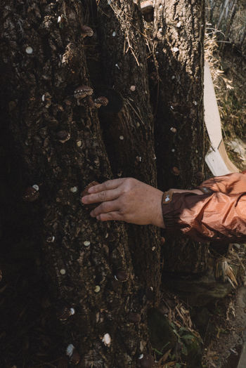 Cropped hands of man touching tree trunk in forest