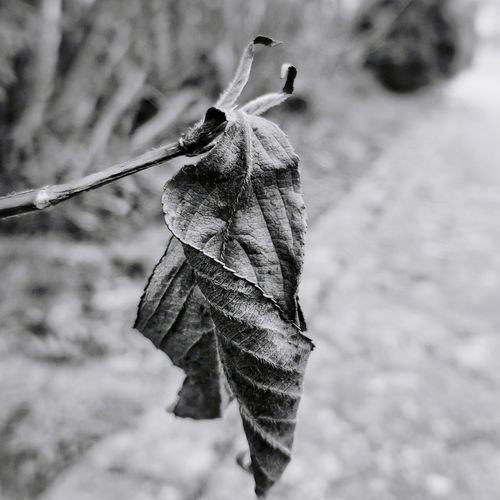 Old plant EyeEm Selects Leaf Close-up Wilted Plant Dried Plant Dead Plant Plant Pod Dead Tree