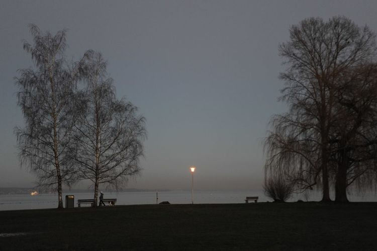 Bare Tree Beauty Beauty In Nature Bodensee Calm Kreuzlingen Nature No People Outdoors Scenics Silhouette Sky Sunset Tree EyeEmNewHere
