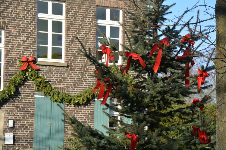 Architecture Building Exterior Built Structure Christmas Christmas Tree Day Nature No People Outdoors Red Tree Window