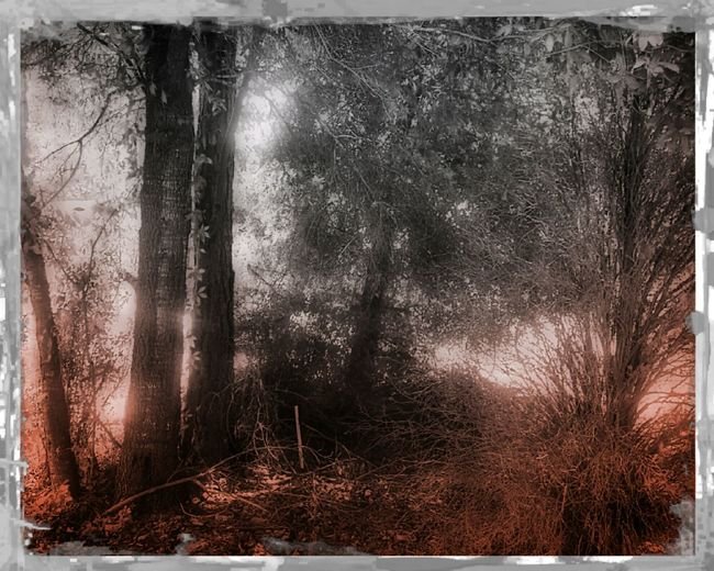masbeth grove 2