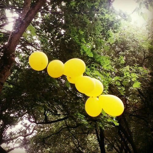 Maison Radieuse Fête Des Couleurs Yellow Balloons