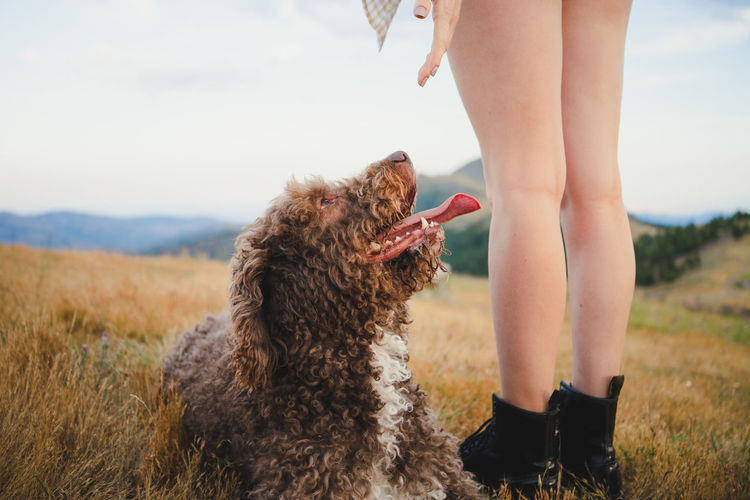 Low section of person with dog standing on land