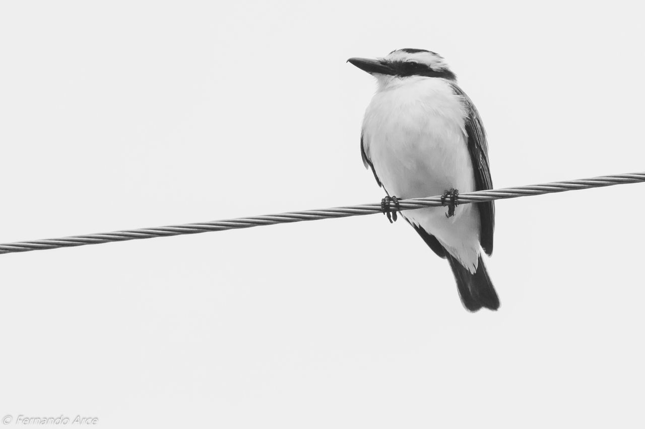BIRD PERCHING ON CABLE AGAINST CLEAR SKY