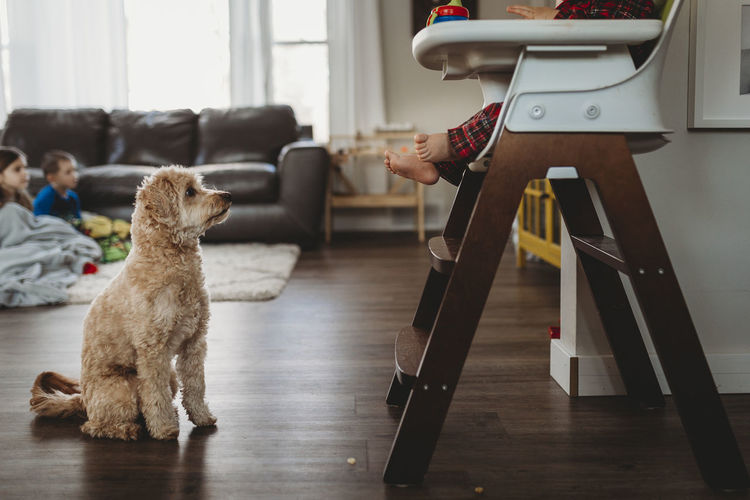 Low section of person with dog at home