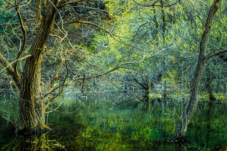 Swamp WoodLand