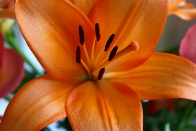 MACRO SHOT OF ORANGE FLOWER