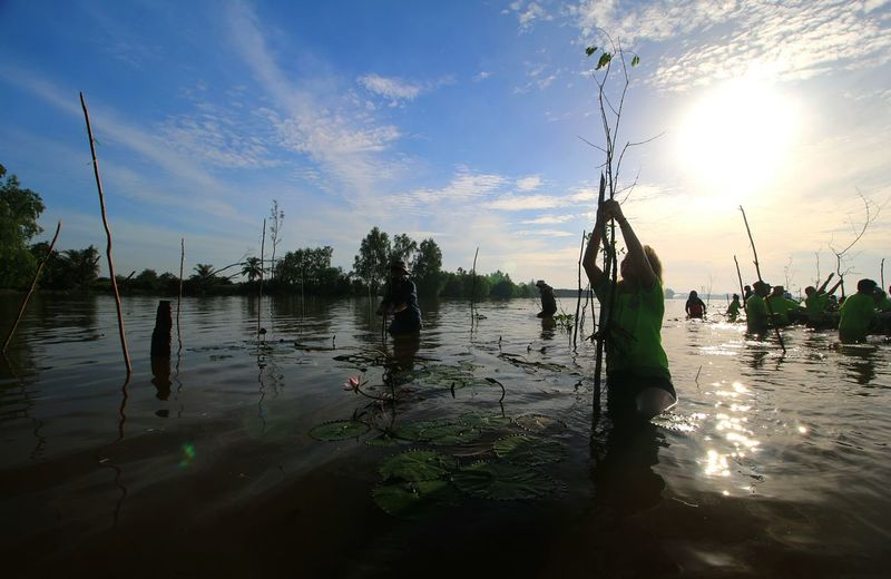 Planting Mangrove Capture Tomorrow Water Flood Tree Beach Men Fisherman Silhouette Reflection River Sky