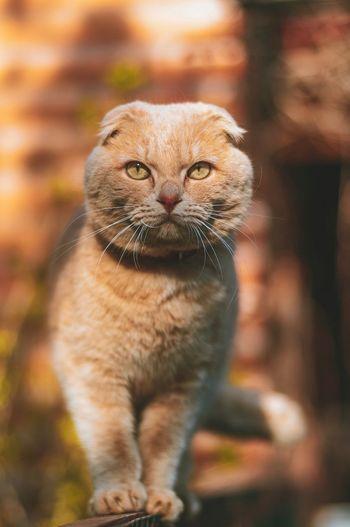 Котик One