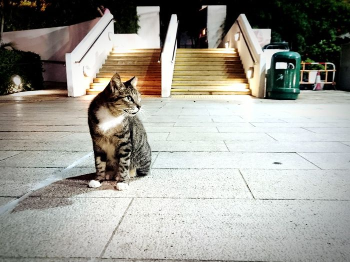 Cats 🐱 Cats Of EyeEm Strays Hong Kong Catlover Cats