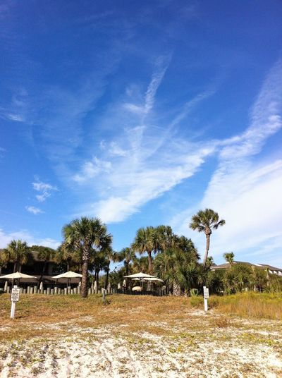 Hilton Head Island Summertime Sommer Sand Beach Tree Sky Nature Day Beauty In Nature