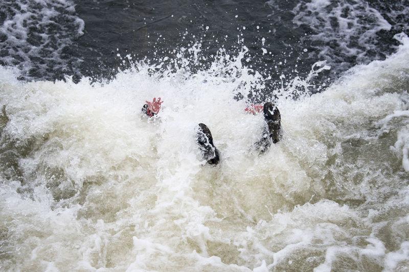 The Big Splash! Adventure Club Extreme Falling Fun Hands Kayaking Splashing Water Action Adventure Extreme Sports Fall Feet Kayak Nature Outdoors People River Splash Splashing Sport Water Watersport Watersports Wet White