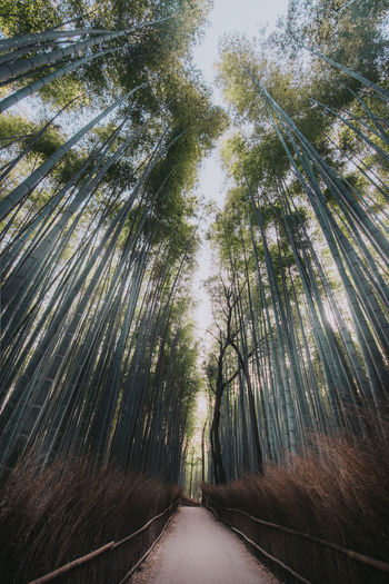 Nikon Bamboo Bamboo - Plant Bamboo Grove Beauty In Nature Day Diminishing Perspective Direction Forest Green Color Growth Land Long Nature No People Outdoors Plant Tall - High The Way Forward Tranquil Scene Tranquility Tree Tree Canopy  Treelined WoodLand The Great Outdoors - 2018 EyeEm Awards