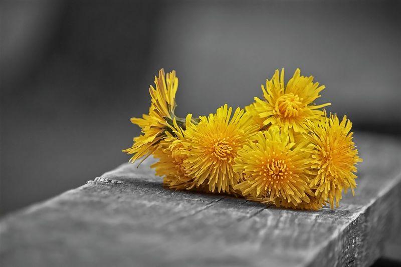 Flowers Duatone