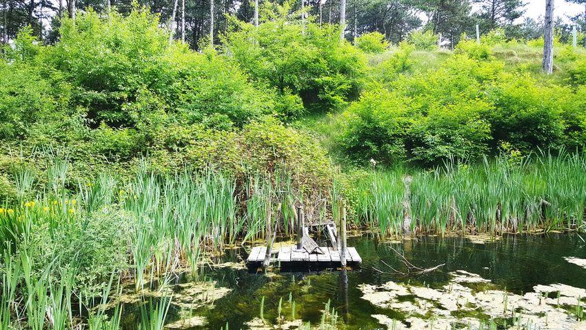 Taking Photos Nature Netherlands Oranjezon Forrest Trees Wildlife & Nature Lakeside Platform Greenery