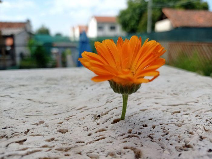 Close-up of orange flower growing on plant