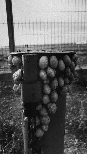 Escargot Plante Marignane