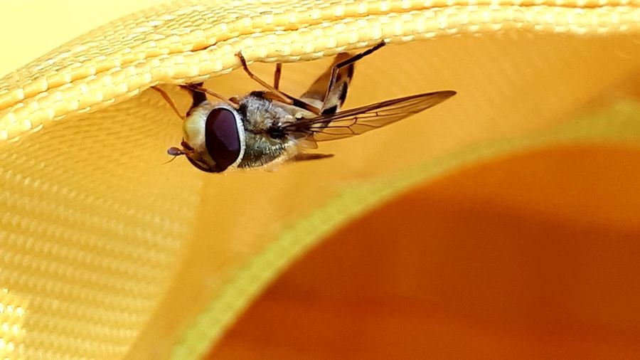 Insect Close-up Animal Themes Mosquito Chachoengsao Spider Butterfly - Insect Arthropod Animal Leg Jumping Spider Symbiotic Relationship Pollination Fly Housefly Animal Antenna Spider Web Bumblebee Honey Bee Bee Prey Buzzing Arachnid Animal Limb Animal Wing Pest Web Dragonfly