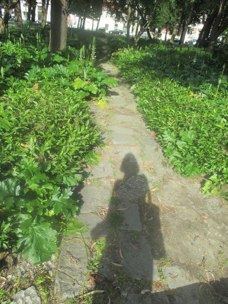 #beauty #calm Nature #path #path Of Life #personality #Shadow #shadow Of A Personality #shadow Of A Woman #shadow On The Path #spring #springtime Beauty In Nature Day Grass Growth Nature One Person Outdoors People Plant Real People Shadow In The Park The Way Forward Tree Women