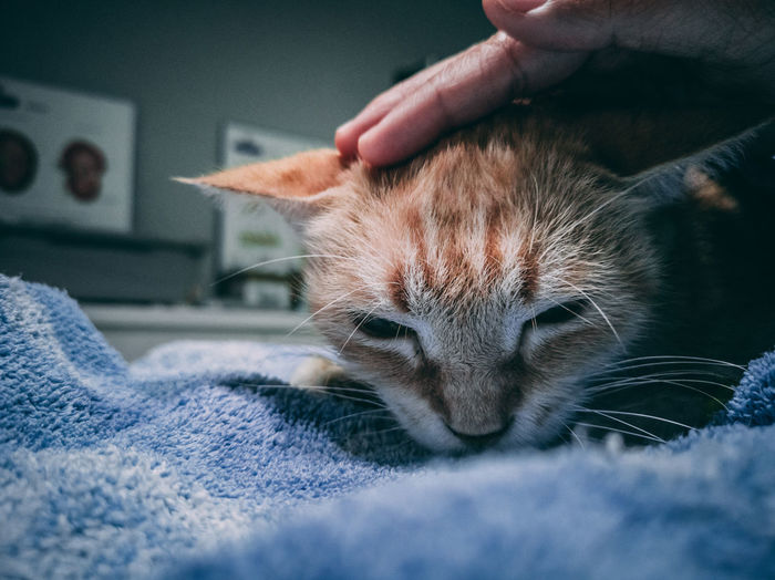 Animals needs love just like humans does (RIP) - TINO Human Hand Pets Feline Domestic Cat Home Interior Portrait Whisker Close-up Cat Stroking Pet Owner Ginger Cat Domestic Animals Pampered Pets Animal Face Adult Animal Sleepy A New Beginning