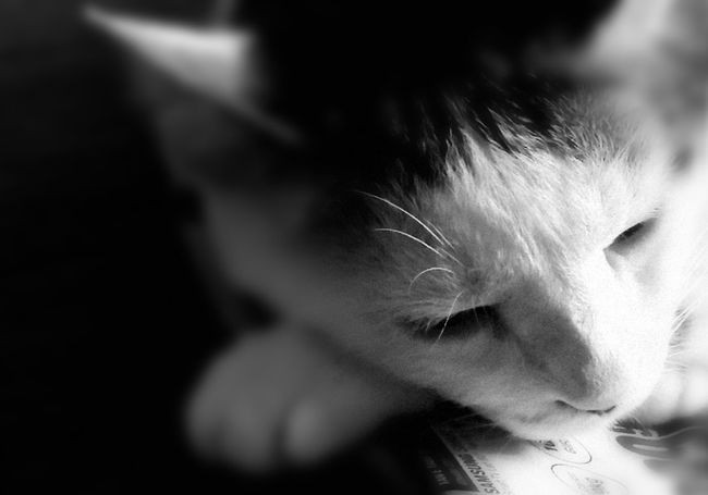 Cointreau Cat Lovers Relaxing Black And White