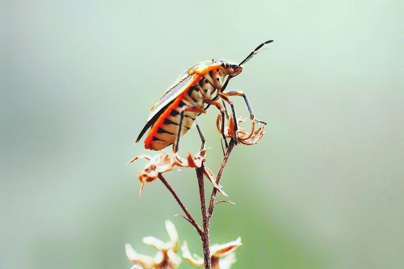Insect Animals In The Wild No People Animal Wildlife Animal Themes Nature Full Length Conformity Eating Butterfly - Insect Outdoors Tranquility Perching Plant Close-up Fragility Day Flower Freshness Animal Animals In The Wild Animal Wild Macro Living Organism Damselfly